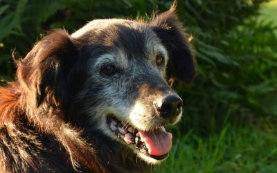 Comment prendre soin de mon animal âgé ?