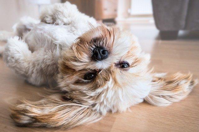 Comment venir à bout des problèmes de peau de mon chien ?